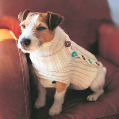 Knitted dog sweater. Pattern here http://a.allaboutyou.com/pattern/40998.pdf