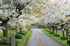 I want a lane like this leading up to my house!