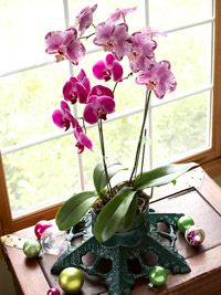 How to grow orchids Indoors. I love orchids but haven't had much luck growing them. I'll try it again!