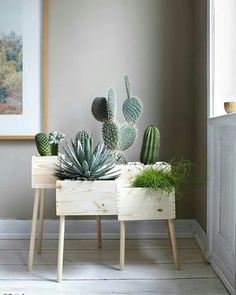 Love this simple yet stunning cactus display - WOW!