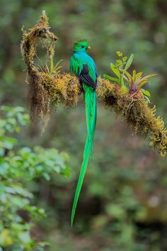 All Birds, Little Birds, Exotic Birds, Colorful Birds, Bird Pictures, Pictures To Draw, Types Of Animals, Cute Animals, Quetzal Tattoo