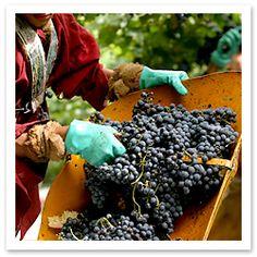Mendoza: Argentina's Wine Country via Fodor's #MendozaMasters