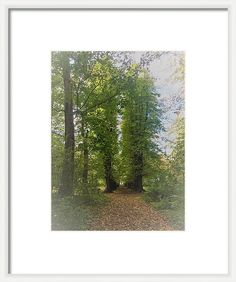 Photography Framed Print featuring the photograph Wood by Britta Zehm