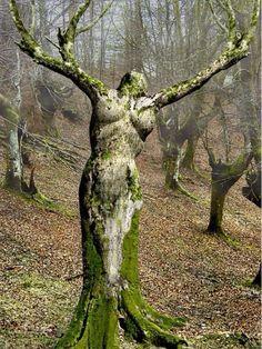Bello árbol.