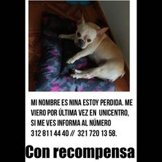 #perroperdido You Lost Me, Dogs