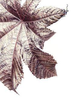 Leaf 120820141314, Ricin (Ricinus communis), 76 x 56cm, Watercolour on paper