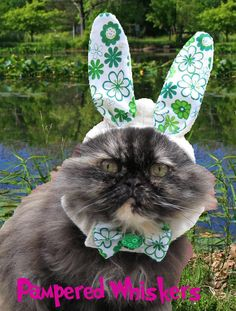 The Hopper Bunny Hat for cats and dogs by PamperedWhiskers on Etsy, $14.99