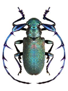gorgeous beetle - Different Ideas Beetle Insect, Beetle Bug, Insect Art, Cool Insects, Bugs And Insects, Longhorn Beetle, Especie Animal, Cool Bugs, A Bug's Life