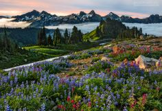 This is a gallery of fine art nature photography by Aaron Reed presented in a panoramic format. Cross Country, Landscape Photography, Nature Photography, Photography Magazine, Travel Photography, Mt Rainier National Park, Beautiful Places, Beautiful Pictures, Amazing Places