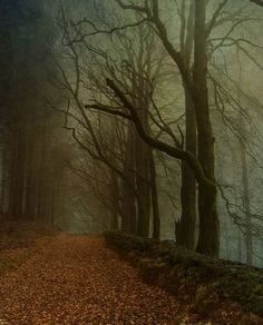 Dark Wood, Devon, England photo via gina