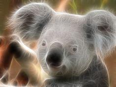 fractal koala