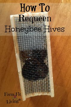 Have you found your honeybee hive to be without a Queen bee? Heres how to requeen queenless honeybee hives so the hives can thrive again. Honey Bee Hives, Honey Bees, Beekeeping For Beginners, Raising Bees, Bee Boxes, Bee Farm, Backyard Beekeeping, Organic Gardening Tips, Urban Gardening