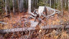 Remains of the Iverson Cabin, near Bonanza, Alberta. photo taken autumn 2013 by self.