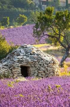 "A Borie - dry-stoned ""house"" in Lavender field- Sault region, Vaucluse, Provence, France La Provence France, Paris France, Places To Travel, Places To See, Places Around The World, Around The Worlds, Beautiful World, Beautiful Places, Dry Stone"