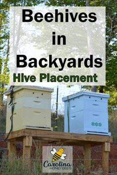 How to find the best location for your beehive? Hive placement plays an important role in the health of your bee colony. Bee Facts, Bee Hive Plans, Bee Swarm, Raising Bees, Bee Boxes, Backyard Beekeeping, Bee Friendly, Bees Knees, Best Location