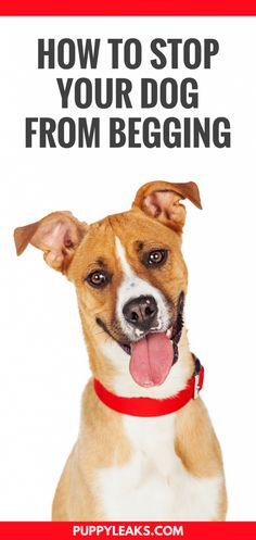 How to Stop Your Dog From Begging. Does your dog beg for food? Here's 3 easy ways to stop your dog from begging. Dog Training Books, Training Your Puppy, Dog Training Tips, Potty Training, Training School, Training Plan, Brain Training, Tips & Tricks, New Tricks