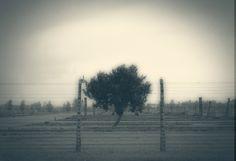 HITLER´S TREE. Poland 2012