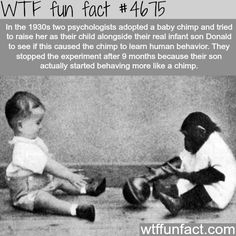 This experiment was actually really horrible and it's up there with one of the worst phycology experiments ever done.