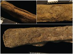 Tuberculosis found in 7,000 year old bodies