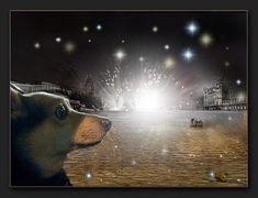 ... oh Gott - schon wieder Weltkrieg !!!!!! Photo Manipulation, My Photos, Animals, Photomontage, God, World War One, Pet Dogs, Animales, Animaux