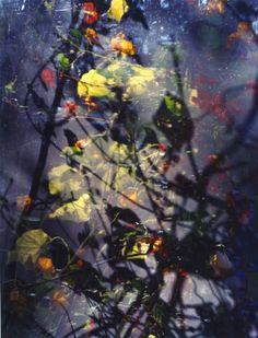 Jorma Puranem Sixteen Steps to Paradise (photography nature) Abstract Landscape, Abstract Art, Appropriation Art, Internet Art, New Media Art, Feminist Art, Light Photography, Medium Art, Photo Manipulation
