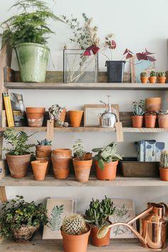 spruce-ladder-plant-shelves-shelf-botany-gardenista-2