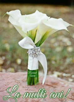 Few fresh cut flowers offer the elegance and versatility of the calla lily. If you are designing your own wedding bouquet, centerpieces or arrangements, the calla lily will provide all of the style… Summer Wedding Bouquets, Bride Bouquets, Floral Wedding, Trendy Wedding, Wedding Ideas, Wedding Dresses, Wedding Inspiration, Bling Wedding, Wedding Beach