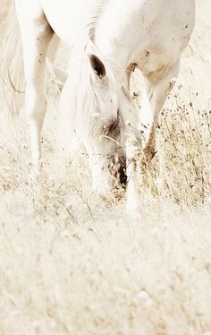 White horse in white setting