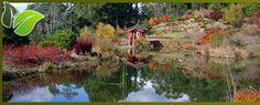 Emu Valley Rhododendron Garden, Burnie, Tasmania, Australia Emu, Tasmania, Continents, Golf Courses, Australia, Island, Explore, Country, Garden