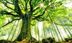 most beautiful photography trees - Google zoeken