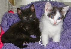 szminka w szpilkach: Kociak tu, kociak tam, na ich punkcie bzika mam, czyli jak mi się rodzina powiększyła