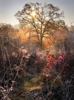 November Frost, Ukraine    photo via letters But we can live in the swamp and eat brown roots