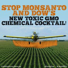 Keep Toxic New Agent Orange GMOs off Your Plate! http://bit.ly/1z2Wp5C The first generation of biotech crops has failed. And failed badly. Excessive use of Roundup by GMO farmers has led million of acres of U.S. farmland filled with Roundup resistant superweeds. Tell the EPA to Dump Dow's Dangerous New Enlist Agent Orange GMOs! http://bit.ly/1z2Wp5C Food Democracy Now! #agentorange #superweeds #roundup #food #contamination #humanhealth