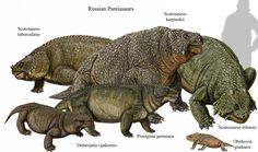 Russian Pareiasaurs by DiBgd