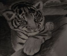Charcoal baby tiger cub art drawing #Modernism