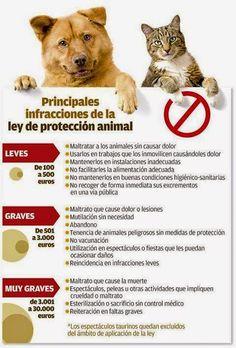 ASOCIACION COORDINADORA PROTECTORAS PROVINCIA PONTEVEDRA: Nueva ley de Protección animal aprobada ayer por e... Facebook, Law, Animales, Friends