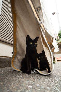 Kitties noir