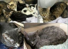 Despite having $900 in pledges, cats in NC shelter at risk of being killed. They will be killed on the morning of July 9th. Please help!