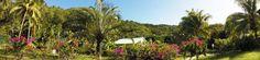 magnifique jardin tropical aux locations de #gites Flerus des iles à #Deshaies
