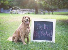 Pregnancy announcement photography | ©Ashley McKelvey Photography