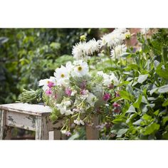 These cut flowers will look great in the garden. Keep cutting & they will produce vases of fantastic flowers. Plants Online, Buy Flowers, Mixers, Dahlia, Garden Plants, Planting Flowers, Wedding Flowers, Home And Garden, Pastel