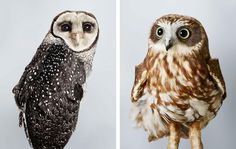 Leila Jeffreys' portraits offer a clean, unique perspective on dozens of spectacular species.