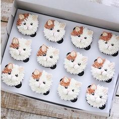 """10.1 mil Me gusta, 103 comentarios - Brooke Haven (@brookiescookiesco) en Instagram: """"Happy Monday!! Hope you have a """"purrfect"""" day!! . : @ivenoven . . #cat #catcupcakes #cupcakes…"""""""