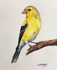 AMERICAN GOLDFINCH ON THE BRANCH, YELLOW BIRD ART, ORIGINAL WATERCOLOR PAINTING #Impressionism
