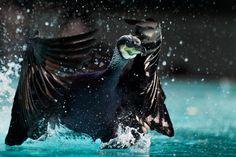 Seabirdsавтор: Fotopedia Editorial Team