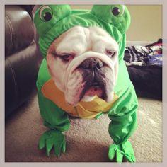 Happy Halloween | BaggyBulldogs