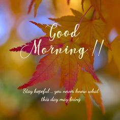 Latest good morning images with flowers ~ WhatsApp DP, Love DP, DP Images, WhatsApp DP For Girls Good Morning Daughter, Good Morning Letter, Good Morning For Him, Good Morning Love Messages, Good Morning Picture, Good Morning Greetings, Good Morning Wishes, Morning Blessings, Night Wishes