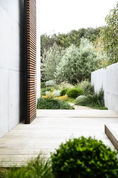 Designed by Acre - Munro Street. www.acre.com.au Photo by Derek Swalwell. Construction by Powda. Outlook from pedestrian entry. Coastal garden with off form concrete Sustainable Design, Acre, Landscape Architecture, Garden Plants, Backyard, Magazine, Outdoor Decor, Home Decor, Screens