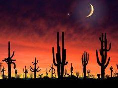 saguaro national park. Saguaronationalparl17102008.jpg Arizona  32°15′N 110°30′W / 32.25°N 110.50°W. Founded October 14, 1994. 91,439.71 acres (370.0 km2)