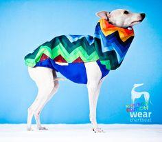 Ubranko dla charcika włoskiego / italian greyhound jacket #italiangreyhound #charcikwłoski #dogwear #dogclothes